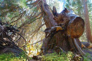 Bild: Sequoia Nationalpark