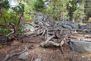 Bild: Sequoia Nationalpark Natur