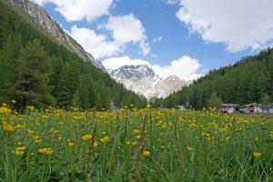 Alpen Tal