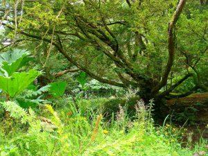 Gartenpark in Irland