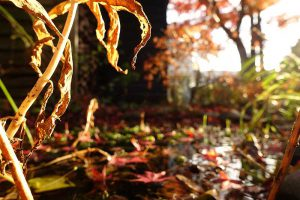 Gartenweiher im Herbst