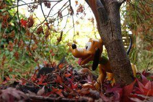 Pluto im Herbst