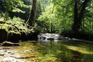 Wald Lützeltal