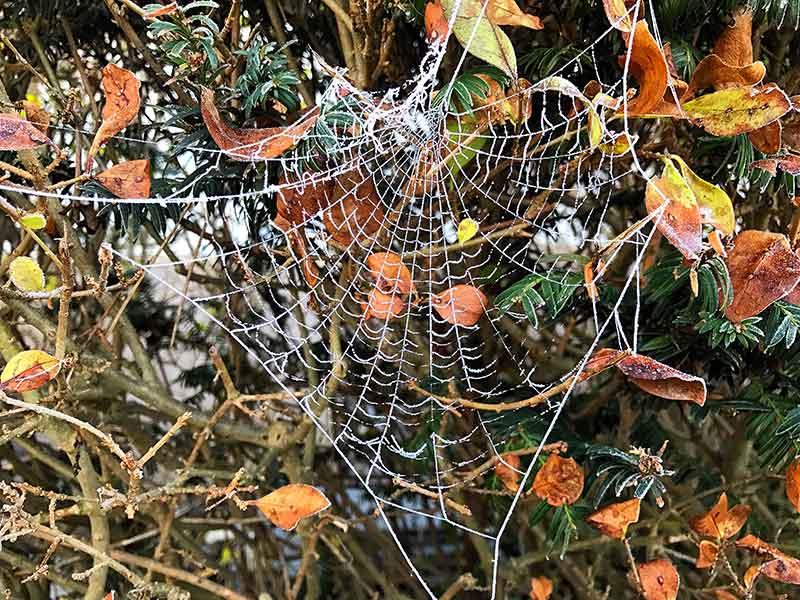 Spinnennetz im Winter Informationen
