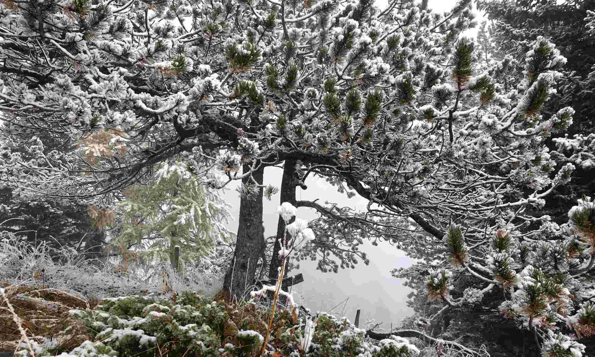 Baum im Nebel, Sunnbüel