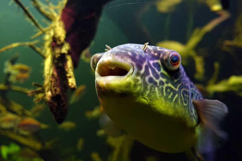 Unterwasserwelt, Fotografien Urs Ulrich