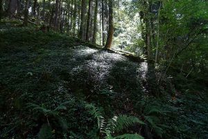 Wald, Lützeltal