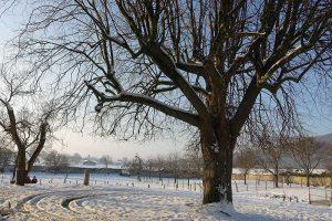 Winter Jura