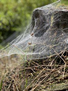 Bild: Spinnweben, Spinnennetz
