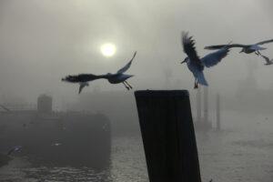 Nebel im Hamburger Hafen