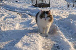Katze im Schnee im Jura